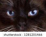 Closeup Portrait Blue Eyes...