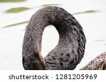 Ducks Closeup Abstract Form