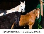 portrait of horses in their...   Shutterstock . vector #1281225916