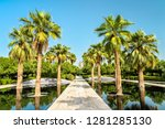 palm grove in al shaheed park ... | Shutterstock . vector #1281285130