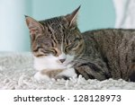Stock photo a sleeping cat over a white carpet 128128973