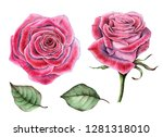 watercolor set of roses and... | Shutterstock . vector #1281318010