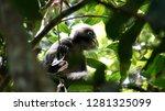kedah  langkawi  malaysia   apr ...   Shutterstock . vector #1281325099