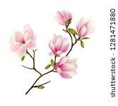 magnolia branch. beautiful.... | Shutterstock .eps vector #1281471880