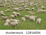 Flock Of Sheep In A Green...