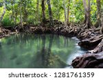 mangrove trees and blue crystal ... | Shutterstock . vector #1281761359