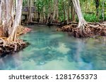 mangrove trees and blue crystal ... | Shutterstock . vector #1281765373