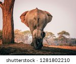 Stock photo elephant mother with child at the waterhole of senyati bush camp at sunset botswana 1281802210