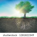 tree and soil with roots and... | Shutterstock . vector #1281822349
