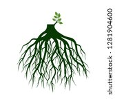 tree roots and germinate limb.... | Shutterstock .eps vector #1281904600