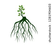 tree roots and germinate limb.... | Shutterstock .eps vector #1281904603