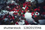 plants with white ice | Shutterstock . vector #1282015546