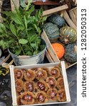 Fresh Chestnuts And Squash In...