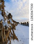 Small photo of closeup of stook of corn in row during cold winter evening with heavenly sky and room for text. Heritage tradition hard work concept.