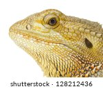 Portrait Of Bearded Dragon Hea...