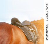 horse closeup detail with saddle   Shutterstock . vector #1282137646