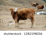 cow red suit and strong... | Shutterstock . vector #1282198036