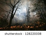 Nature Ash  Burning Forest ...