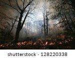 Nature Ash  Burning Forest ...