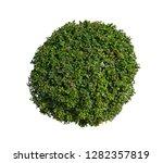 bush isolated on white... | Shutterstock . vector #1282357819