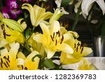 yellow flowers tropical with... | Shutterstock . vector #1282369783