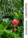 A Lacy Red Hibiscus With A Long ...