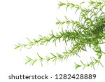 rosemary isolated on white... | Shutterstock . vector #1282428889