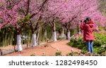 landscape misty panorama  ... | Shutterstock . vector #1282498450