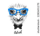 hand drawn sketch ostrich... | Shutterstock .eps vector #1282631170