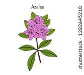 azalea  rhododendron obtusum  ... | Shutterstock .eps vector #1282645210
