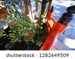 the takashi shrine in nagasaki  ... | Shutterstock . vector #1282649509
