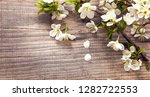 spring flowers on background of ... | Shutterstock . vector #1282722553