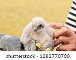 cute little young kestrel... | Shutterstock . vector #1282770700