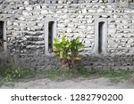 isolated plant on the street... | Shutterstock . vector #1282790200