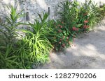 plants in the ground on the... | Shutterstock . vector #1282790206
