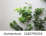 white wall background with a... | Shutterstock . vector #1282790233
