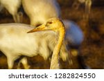 common crane birds in the... | Shutterstock . vector #1282824550