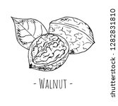 hand drawn isolated walnut on a ... | Shutterstock .eps vector #1282831810