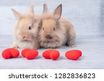 Stock photo couple small light brown rabbit on gray background in valentine s theme with mini heart 1282836823