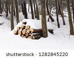 the sawn tree is cut into logs... | Shutterstock . vector #1282845220