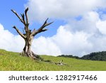 the big dead tree in the... | Shutterstock . vector #1282917466