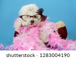 dog photo shoot. beautiful... | Shutterstock . vector #1283004190