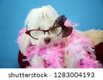 dog photo shoot. beautiful... | Shutterstock . vector #1283004193
