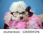 dog photo shoot. beautiful... | Shutterstock . vector #1283004196