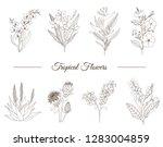 vector set of tropical flowers... | Shutterstock .eps vector #1283004859