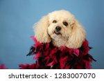 dog photo shoot. beautiful... | Shutterstock . vector #1283007070