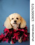 dog photo shoot. beautiful... | Shutterstock . vector #1283007073