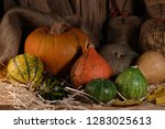 Decorative Pumpkins For Haloween