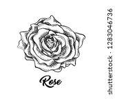 rose wine flower hand drawn... | Shutterstock .eps vector #1283046736