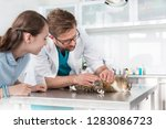 doctor examining cat on table... | Shutterstock . vector #1283086723